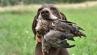 Der Kurzhaarzwinger vom Oderstrom hat noch einen Welpen abzugeben