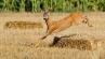 Jagen im Vogtland: Blattzeitjagdwoche