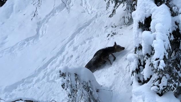Wild in Not: Jäger machen Front gegen die Bundesforste
