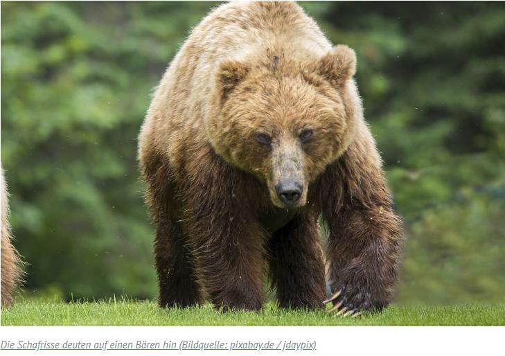 Österreich: Bärenalarm in Tirol