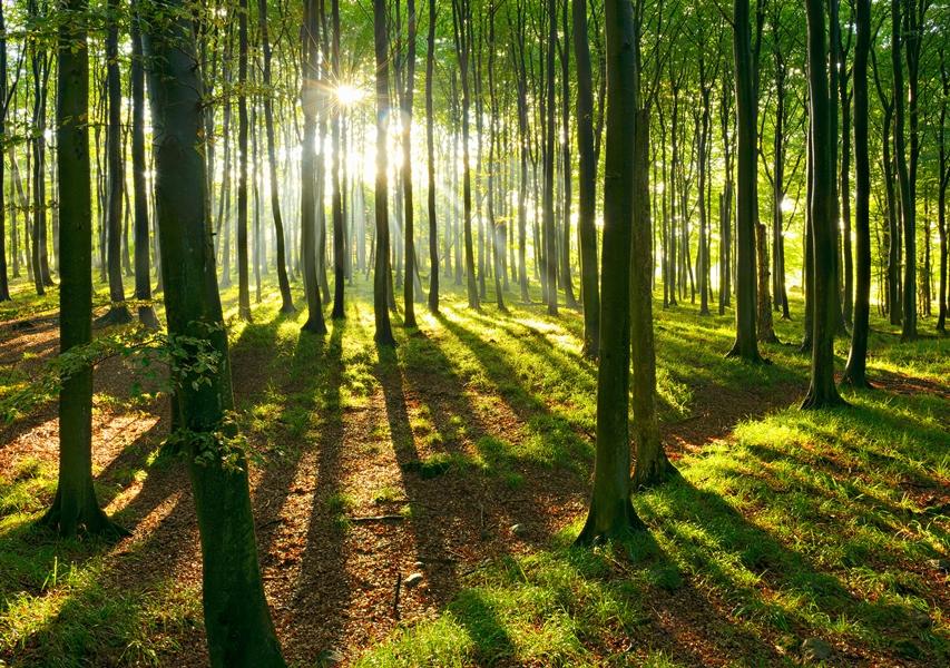 Bayern will 30 Millionen Bäume pflanzen