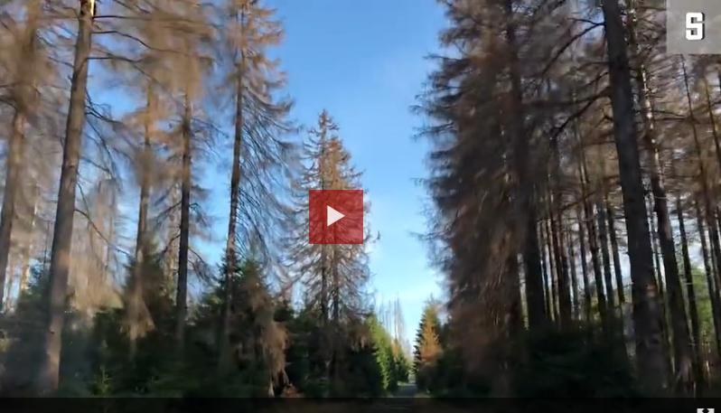 Video-Reportage aus dem Harz - Wenn der Wald stirbt