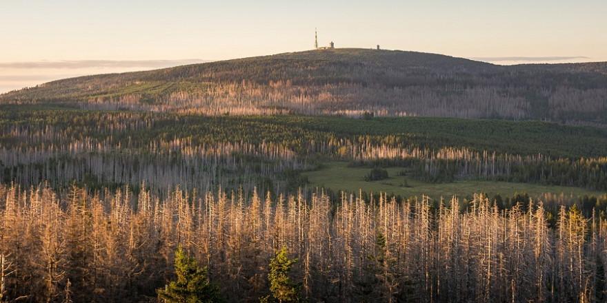 Schwere Zeiten für Forstexperimente Teil II