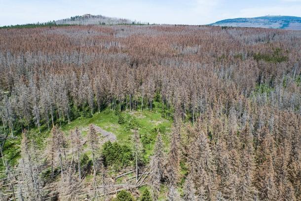 Privatwaldbesitzer in Existenznot: Kein Geld für Aufforstung