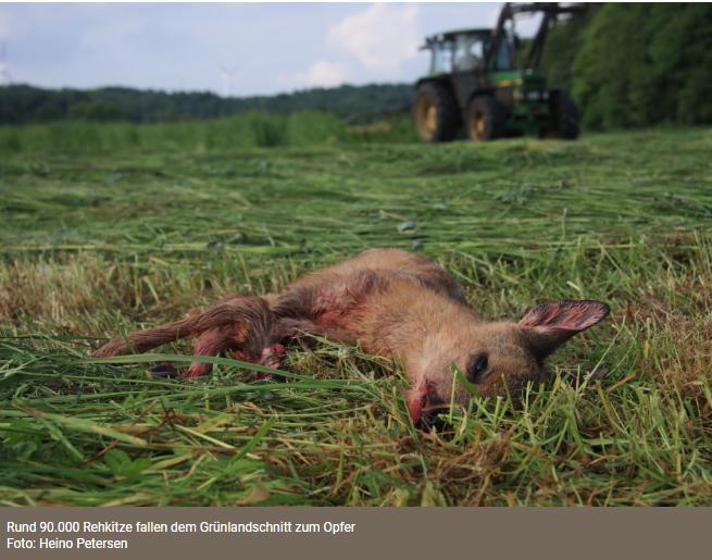 Mähtod: Norddeutsche Wildtierrettung startet Spendenaufruf