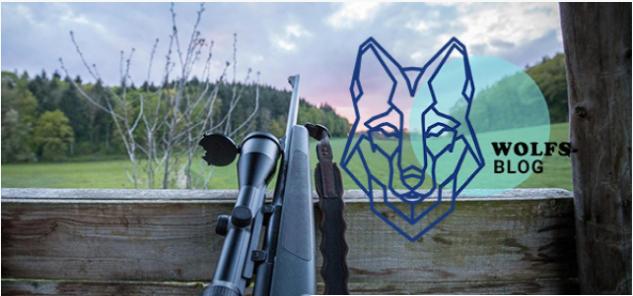 """Es gibt """"kein unabhängiges Wolfs-Monitoring"""" in Ö"""