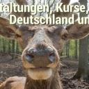 https://www.deutsches-jagdportal.de/portal/images/avatar/group/thumb_0ee69baedaf5d821b57c170fea70f2d9.jpg