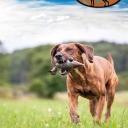 Hundeservice Peter Müller