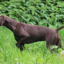 Hundeschule Spurlaut