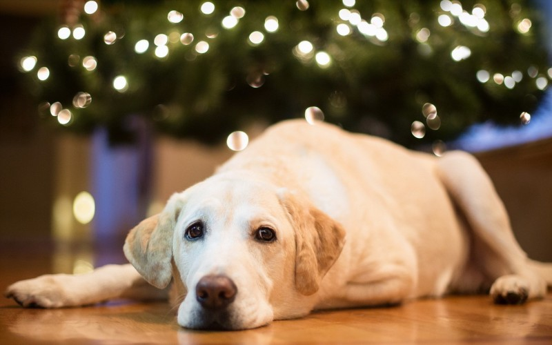 DogWhistler Weihnachtsworkingtest für Schnupperer, Anfänger, Fortgeschrittene und Offen Klasse