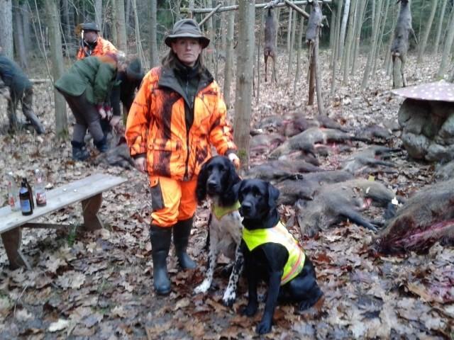 Mit meinem Labrador Apollo bin ich regelmäßig als Durchgehschütze auf Drückjagden. Dickungen durchstöbern und Sprengen der Sauen sind kein Problem für ihn. An dieser Drückjagd in Dezember 2014 kamen 23 Sauen zur Strecke.