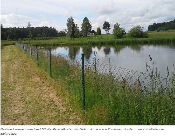 Hürden für den FischräuberDie Ausbreitung des Fischotters führt immer wieder zu Konflikten mit Fischzucht und Fischerei. Das Land Niederösterreich fördert die Errichtung von Zäunen, um Fraßschäden hintanzuhalten.20. April 2021   Der Fischotter ist eine nach der europäischen Naturschutzrichtlinie (Fauna–Flora–Habitat-Richtlinie) streng geschützte Tierart, dessen Verbreitung sich mittlerweile über ganz Niederösterreich erstreckt. Weil dieser wie schon sein Name verrät vor allem Fische, aber auch Amphibien, Krebse und Weichtiere verspeist, gerät er immer wieder in Konflikt mit Fischern und allen voran mit Teichwirten.https://bauernzeitung.at/huerden-fuer-den-fischraeuber/