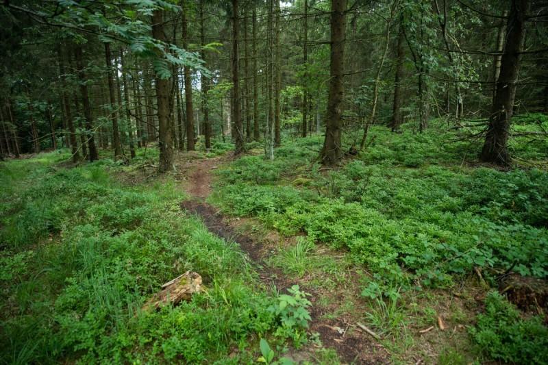 MIT VOLLGAS DURCH DEN WALD Von Alexander Ahrenhold   1. September 2021  IMMER DREISTERE NUTZUNG ILLEGALER MOUNTAINBIKE-TRAILS(Springe / Deister) Immer mehr Mountainbiker zieht es an die Hänge des Deisters – längst nicht alle halten sich hierbei an die ausgewiesenen, legalen Downhill-Trails am Nienstedter Pass. Immer mehr illegale Trails werden angelegt und von immer mehr Mountainbikern genutzt, wie die Niedersächsischen Landesforsten feststellen. Bau und Nutzung dieser Trails verstoßen nicht nur gegen geltendes Recht, sie beeinträchtigen auch andere Waldfunktionen wie die ruhige Erholung oder Naturschutzziele.Schon seit langer Zeit ist der Deister als vor den Toren Hannovers gelegene Erhöhung Anziehungspunkt für Mountainbiker, die aus dem gesamten Nordwestlichen Niedersachsen und darüber hinaus anreisen. 2014 wurde im Wald der Niedersächsischen Landesforsten zusammen mit der Region Hannover und den Deisterfreunden – einem zu diesem Zweck gegründeten Radsportverein – zwei legale Mountainbike Strecken angelegt, die sich bei den Mounainbiker großer Beliebtheit erfreuen. Diese Trails dienten damals als Testballon für ein zukünftig größeres Angebot legaler Trails.https://www.landesforsten.de/blog/2021/09/01/mit-vollgas-durch-den-wald/