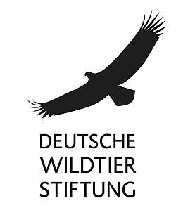 """EINMAL TOP, SONST NUR FLOPLob und Kritik zum zweiten Änderungsentwurf des Landesjagdgesetzes in NiedersachsenNachdem es Kritik von vielen Naturschützern hagelte, vor allem in Bezug auf den zu schwachen Schutz von Elterntieren, besserte das Bundesland Niedersachsen seinen ersten Entwurf zur Änderung des Landesjagdgesetzes nach. Diese geänderte Fassung ist aber weder für Wildtier noch für Mensch richtig gut. Dr. Andreas Kinser erklärt, warum.HAMBURG, 05. OKTOBER 2021Niedersachsen will sein Jagdgesetz zum kommenden Jagdjahr ändern. Der Änderungsentwurf aus dem Frühjahr wurde nachgebessert, nachdem ihn viele Artenschützer vor allem in Bezug auf den zu schwachen Schutz von Elterntieren kritisiert hatten. """"Der Schutz biologisch notwendiger Elterntiere ist nicht verhandelbar"""", sagt Dr. Andreas Kinser, stellvertretender Leiter Natur- und Artenschutz der Deutschen Wildtier Stiftung. Gerade beim Rotwild hat der Jäger aufgrund der engen und langen Bindung zwischen Muttertier, auch Alttier genannt, und dem Kalb eine besondere Verantwortung bei der Jagd auf Alttiere – nicht zuletzt auf den bevorstehenden Gesellschaftsjagden im Herbst.* """"Folgerichtig wurde an dem ursprünglichen Vorschlag des Landwirtschaftsministeriums, Elterntiere erlegen zu dürfen, die nicht mehr erkennbar zur Führung ihres Nachwuchses notwendig sind, nicht festgehalten"""", erklärt Kinser.https://www.deutschewildtierstiftung.de/aktuelles/lob-und-kritik-der-deutschen-wildtier-stiftung-zum-2-aenderungsentwurf-des-landesjagdgesetzes-in-niedersachsen"""