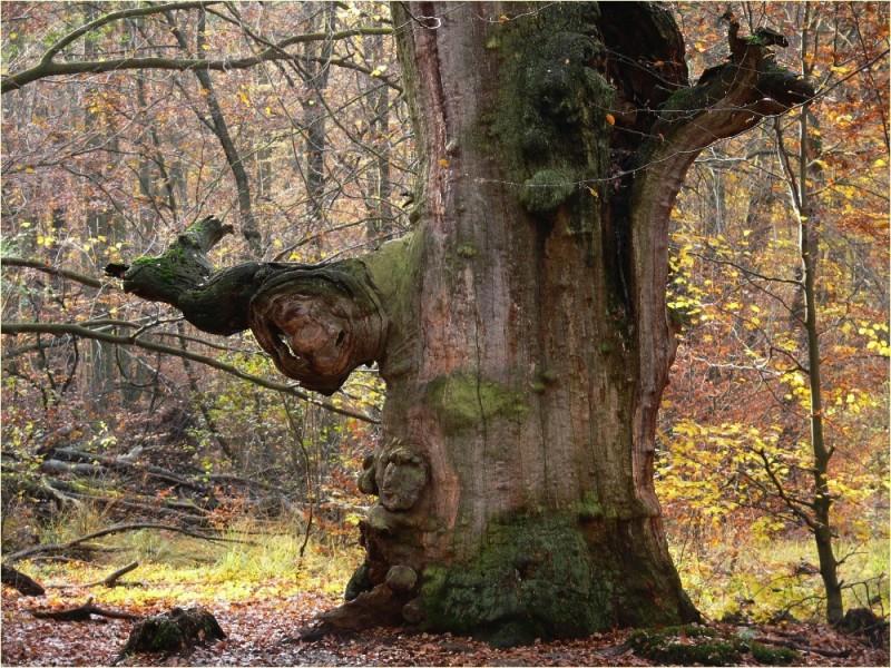 11.08.2018, Exkursion in den Waldbetrieb Forst Gadow, Herausforderungen von FFH/Natura 2000 in der Waldbewirtschaftung, 19309 Lanz OT Gadowhttps://www.deutsches-jagdportal.de/portal/index.php/community/viewevent/3082-11-08-2018-exkursion-in-den-waldbetrieb-forst-gadow-herausforderungen-von-ffh-natura-2000-in-der-waldbewirtschaftung-19309-lanz-ot-gadow