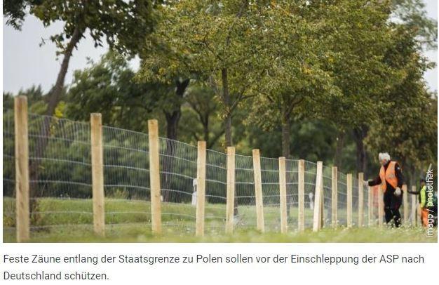 Afrikanische Schweinepest   -  Seuche grassiert weiter in Grenzregion12. April 2021   BERLIN Das Friedrich-Loeffler-Institut bestätigt bis zum 8. April insgesamt 958 ASP-Fälle bei Wildschweinen in Sachsen und Brandenburg. Auf polnischer Seite wurden im ersten Quartal mehr als 1.000 Fälle verzeichnet. Die Interessengemeinschaften der ostdeutschen Schweinehalter beklagen erfolglose und unkoordinierte Seuchenbekämpfung und fordern, dass Bundeskanzlerin Merkel die Afrikanische Schweinepest zur Chefsache macht.https://www.fleischwirtschaft.de/politik/nachrichten/afrikanische-schweinepest-seuche-grassiert-weiter-in-grenzregion-50297