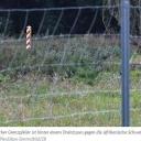 WWF bezweifelt Sinn von Zäunen als Schutz vor Schweinepest25. Juni 2021  Potsdam (dpa/bb) - Die Umweltschutzorganisation WWF Deutschland bezweifelt den Sinn von Zäunen entlang der deutsch-polnischen Grenze zum Schutz vor der Ausbreitung der Afrikanischen Schweinepest (ASP). Vielmehr müssten gravierende negative Folgen für die heimische Natur und Wildtiere befürchtet werden, sagte Nina Gandl, WWF-Wildtierexpertin. Über größere Entfernung breite sich die Seuche bisher hauptsächlich durch den Menschen aus.https://www.zeit.de/news/2021-06/25/wwf-bezweifelt-sinn-von-zaeunen-als-schutz-vor-schweinepest