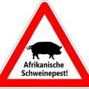 """ASP-Seuchengeschehen   Afrikanische Schweinepest erreicht Frankfurt an der Oder4.03.2021 - Das Nationale Referenzlabor am Friedrich-Loeffler-Institut (FLI) hat den Verdacht auf Afrikanische Schweinepest (ASP) bei einem Wildschwein-Kadaverfund im Bereich der nördlichen Oderwiesen der Stadt Frankfurt (Oder) bestätigt.Wie das Brandenburger Gesundheitsministerium mitteilte, wurde der Kadaver östlich der festen Wildschweinbarriere gefunden. Ein Krisentab wurde eingerichtet.""""Zunächst bin ich froh, dass ganz offensichtlich der Schutzzaun wirkt, denn das Tier wurde vor dem Zaun zur Oderseite hin gefunden"""", sagte Ministerin Ursula Nonnemacher.Der neue Fund zeige aber auch, wie stark der Seuchendruck aus Polen weiterhin sei.Intensive Suche nach weiteren Wildschweinkadavernhttps://www.agrarheute.com/tier/schwein/afrikanische-schweinepest-erreicht-frankfurt-578828"""