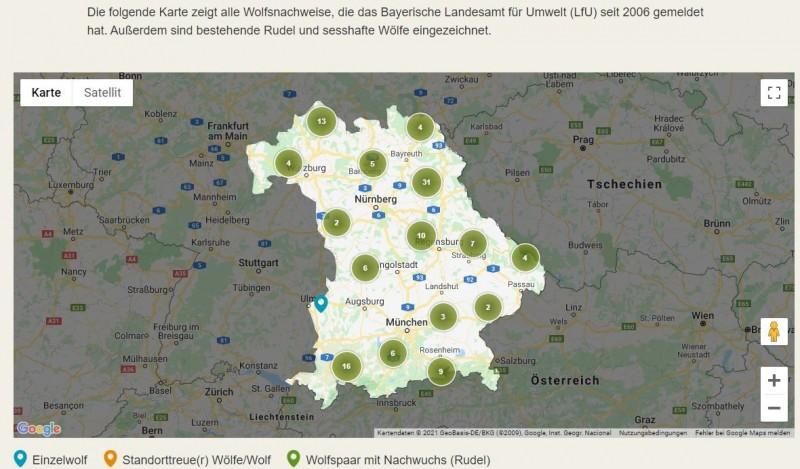 WÖLFE IN BAYERN – ENDLICH WIEDER ZUHAUSEEs gibt wieder Wolfsfamilien in Bayern! Wolfsrudel leben derzeit in vier bayerischen Regionen, in vier weiteren sind Einzelwölfe sesshaft geworden. Der BN begrüßt diese Entwicklung und setzt sich für eine friedliche Koexistenz von Mensch und Wolf ein.Niemand kann wirklich überrascht sein von den ersten Wolfsrudeln in Bayern. Seit 2006 tauchen immer wieder Durchzügler im Freistaat auf. Meistens handelt es sich dabei um einzelne durchwandernde Tiere aus dem südwestlichen Alpenbogen, aus Polen oder Nordostdeutschland. Junge Wölfe verlassen ihre Elternrudel nach einer gewissen Zeit, um sich ein eigenes Revier zu suchen. Dabei wandern sie oft riesige Strecken.Seit einigen Jahren gibt es aber auch standorttreue Wölfe in Bayern. Als standorttreu gilt ein Wolf, wenn er länger als sechs Monate lang im gleichen Gebiet verbleibt oder dort nachweislich Junge bekommen hat.WO GIBT ES SESSHAFTE WÖLFE IN BAYERN?Heute (Stand: 1/2021) gibt es in acht bayerischen Regionen standorttreue (sesshafte) Wölfe:in den Allgäuer Alpen, Einzeltier,im Nationalpark Bayerischer Wald (Süd), Rudel,im Nationalpark Bayerischer Wald (Nord), Rudel,auf dem Truppenübungsplatz Hohenfels (Landkreis Amberg-Sulzbach), Einzeltier,im Manteler Forst (Landkreis Neustadt a. d. Waldnaab), Rudel,Truppenübungsplatz Grafenwöhr (Landkreis Neustadt a. d. Waldnaab), Einzeltier,Veldensteiner Forst (Landkreis Bayreuth), Rudel,in der Rhön, Einzeltier.https://www.bund-naturschutz.de/tiere-in-bayern/wolf