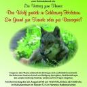 23.8.2018 19,30 Uhr, Wolfsvortrag in Hanerau-Hademarschen